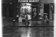 central_flower
